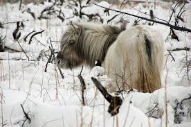 yakutsk oymyakon verkhoyansk coldest places winter tour