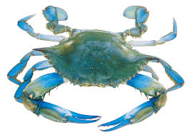 crab decorations for home best 25 crab painting ideas on pinterest crab art alphabetical