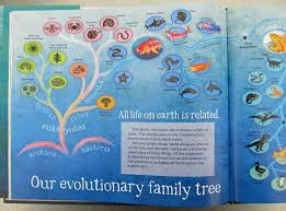 children u0027s books about evolution u2013 awkward botany
