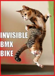 Invisible Cat Memes - great cats be funny blog may 2016