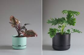 self watering mr kitly decor self watering plant pots cool hunting