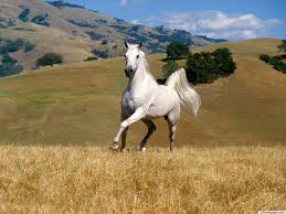pictures top 10 horse wallpaper horse wallpaper hd wallpapers
