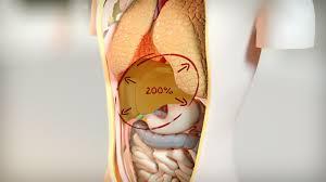 leberschwäche symptome fettleber symptome und ursachen ndr de ratgeber gesundheit
