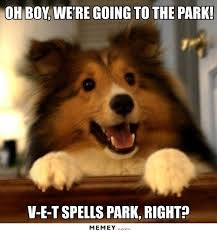 Sexy Dog Meme - dog memes funny dog pictures memey com