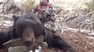 Bears Montana Hunting And Fishing - bear season in montana the best bear 2018