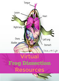 virtual frog dissection resources startsateight