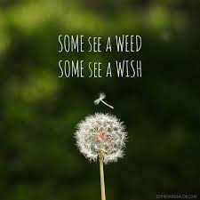 Wish Quotes Sayings Dandelion Quotes And Sayings