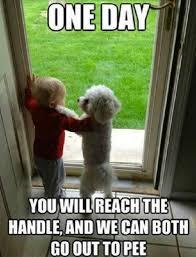 Silly Dog Meme - dog meme monday funny dog meme hilarious dog meme dog and baby