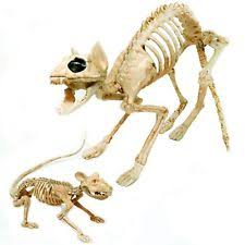 Halloween Decoration Skeleton Cat by Halloween Skeleton U0026 Skull Decorations 1991 Now Ebay