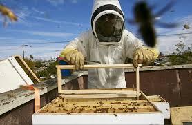 your next new hobby backyard beekeeping factorialist