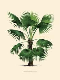coastal living decor tropical palm trees home decor vintage