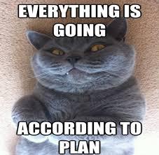 Cat Meme Funny - funny cat memes 40 hilarious pictures