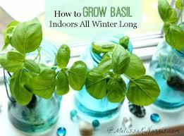 10 Vegetables U0026 Herbs You by 10 Best Herb Garden Images On Pinterest Garden Ideas Garden