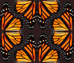 orange monarch butterfly wings fabric bonnie phantasm spoonflower