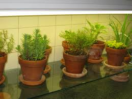 growing herbs indoors under lights glass shelf under fluorescent lights in kitchen i like the way