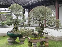 decorative trees and plants for home decoration u2014 tedx designs