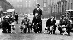 l american pitbull terrier a p b t origins of american pit bull terrier