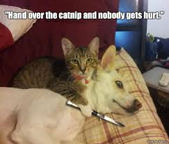 Cat And Dog Memes - cat vs dog memes which are too funny viral slacker