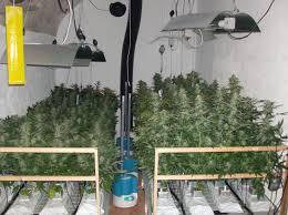 chambre hydroponique comment monter un système de culture de cannabis hydroponique