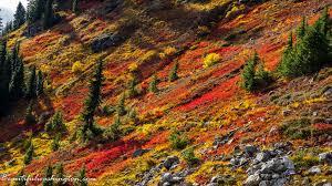 in fall north cascades region