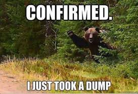 Bear Stuff Meme - pin by alhana leonard on very funny pinterest bear meme meme
