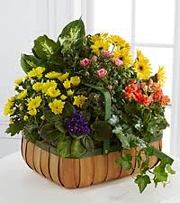 plants for funerals funeral plants plant arrangements plants for funerals from ftd
