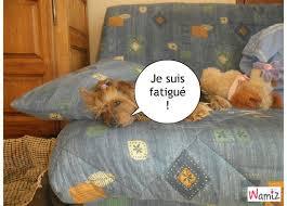 dans le canapé le chien qui dort dans le canapé tooniz lolcats réalisé sur wamiz