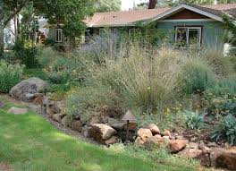 definition of native plants replace your lawn with native plants the real dirt blog anr blogs