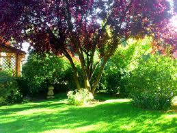 Tropische Pflanzen Im Garten Gartenbäume Grundsätzliches über Bäume Für Den Garten