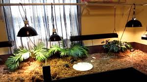 uvb light for turtles my new tortoise table showing l hanging rod youtube