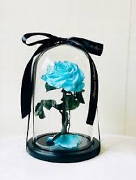 enchanted rose that lasts a year enchanted rose beauty and the beast rose rose that last 1 year
