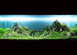 Takashi Amano Aquascaping Techniques Takashi Amano His Compositions In Aquariums Are Characterized By