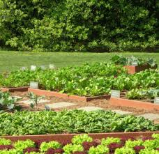 small vegetable garden 16 amazing vegetable garden ideas pic