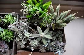 Succulent And Cacti Pictures Gallery Garden Design Decorating With Succulents Gallery Garden Design