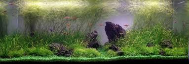 japanese aquascape images of aquascape aquarium wallpaper sc