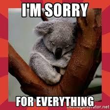 Angry Koala Meme - sorry koala meme koala best of the funny meme