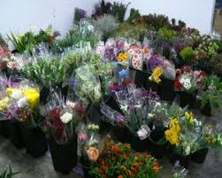 wholesale flowers flower central cairns cairns wholesale flowers