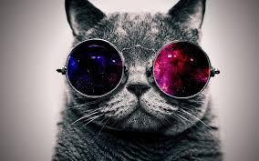 imagenes 4k download download wallpaper 3840x2400 cat face glasses thick ultra hd 4k
