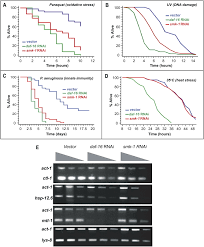 smk 1 an essential regulator of daf 16 mediated longevity cell