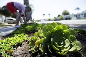 california drought feeds interest for water wise landscaping in