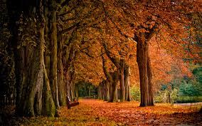 cute autumn backgrounds free autumn wallpaper hd 6790843