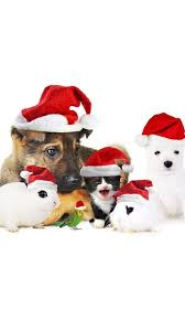cute dog christmas wallpapers 157 best christmas wallpapers 2016 images on pinterest christmas