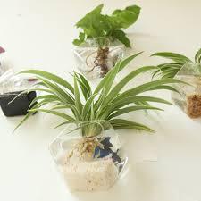 amazon com mkono 2 pack wall hanging plant terrarium glass