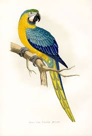 Parrot Decorations Home 241 Best Birds Parrot Toucan Images On Pinterest Animals