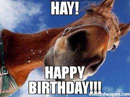 Horse Birthday Meme - hay happy birthday meme custom 46965 memeshappen