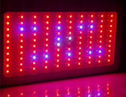 which led grow lights are best for growing cannabis grow easy