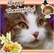 happy thanksgiving usa feline café