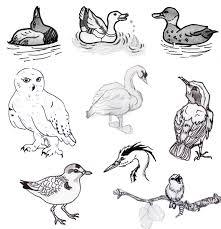 100 birds challenge archive wetcanvas