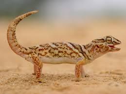 leopard gecko lighting at night leopard geckos exotic bird hospitalexotic bird hospital