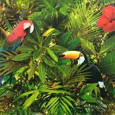 Parrot Decorations Home by Muriva Tropical Jungle Wallpaper 102555